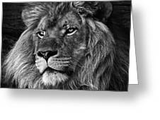 The Lion Pose Greeting Card by Ken Barrett
