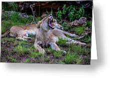 Lion Roar/2 Greeting Card