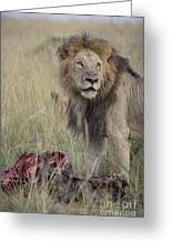 Lion With Kill Greeting Card