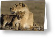 Lioness And Her Cub  Greeting Card