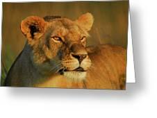 Lioness At Maasai Sunet Greeting Card