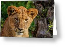 Lioness Cub Greeting Card