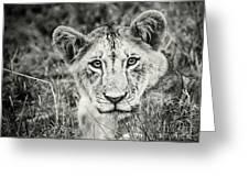 Lioness Portrait Greeting Card