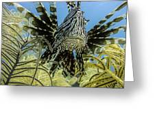 Lionfish Confrontation Greeting Card