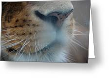 Lion's Breath Greeting Card