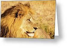 Lions Head Greeting Card