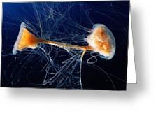 Lions Mane Jellyfish Cyanea Capillata Greeting Card