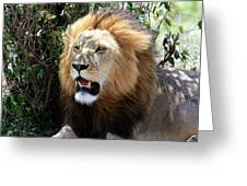 Lions Of The Masai Mara, Kenya Greeting Card