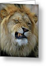 Lions Wink Greeting Card