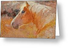 Lipizzian Horse Greeting Card