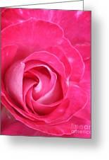 Lipstick Pink Rose Greeting Card