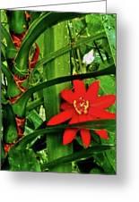 Lipstick Plant Flower Greeting Card