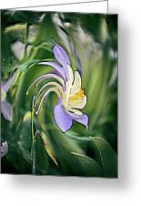 Liquid Columbine Greeting Card