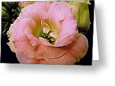 Lisianthus Bloom 2 Greeting Card