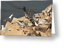 Listen Up Gulls Greeting Card