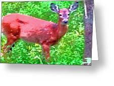 Listening Deer Greeting Card