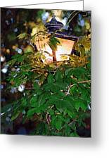 Lit Lamplight Greeting Card
