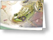 Lithobates Catesbeianus Or Rana Catesbeiana Greeting Card