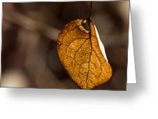 Little Autumn Leaf Greeting Card