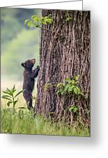 Little Bear Big Tree Greeting Card