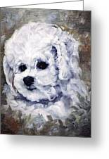 Little Bichon  Greeting Card