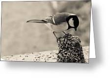 Little Bird Feeding Greeting Card