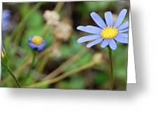 Little Blue Daisies Greeting Card