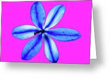 Little Blue Flower On Dark Pink Greeting Card