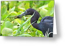 Little Blue Heron Catches A Frog Greeting Card