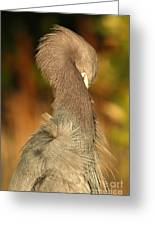 Little Blue Heron Feeling Bashful Greeting Card