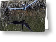 Little Blue Heron Flying From Marsh Greeting Card