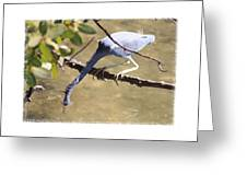 Little Blue Heron Going For Fish With Framing Greeting Card