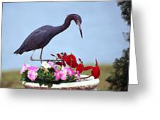 Little Blue Heron In Flower Pot Greeting Card