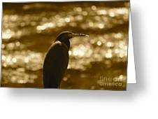 Little Blue Heron In Golden Light Greeting Card