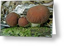 Little Brown Mushrooms In Moss Greeting Card