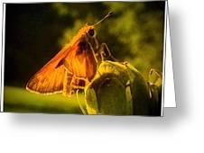 Little Brown Skipper Butterfly Greeting Card