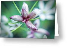 Little Buds Greeting Card