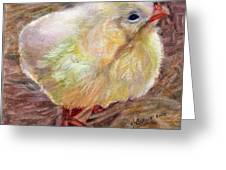 Little Chick Greeting Card