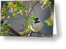 Little Chickadee In The Pink Greeting Card
