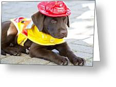 Little Chief Lab Pup Greeting Card