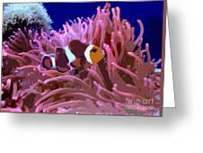 Little Clown Fish Greeting Card