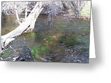 Little Colorado River South Fork Greeting Card