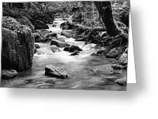 Little Creek 3 Bw Greeting Card