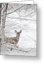 Little Doe In Snow Greeting Card