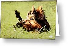 Little Dog Greeting Card