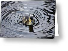 Little Duckling Goes For A Swim Greeting Card