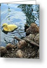 Little Ducky Greeting Card