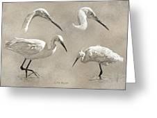 Little Egret Greeting Card