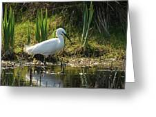 Little Egret Greeting Card