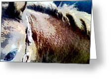 Little Filly Greeting Card